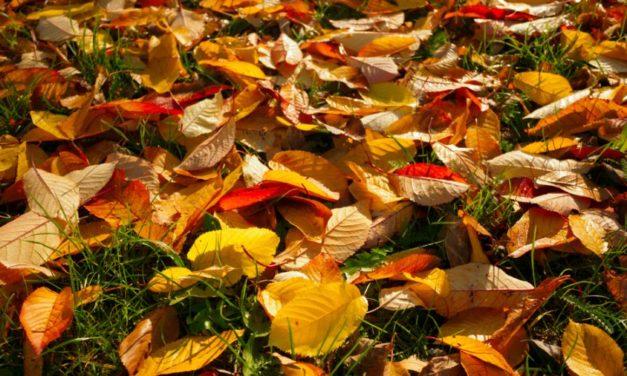 Oktoobrikuu üritused Luunja vallas