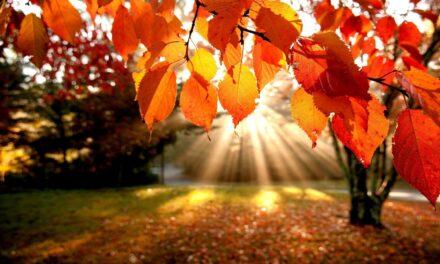 November Luunjas vallas