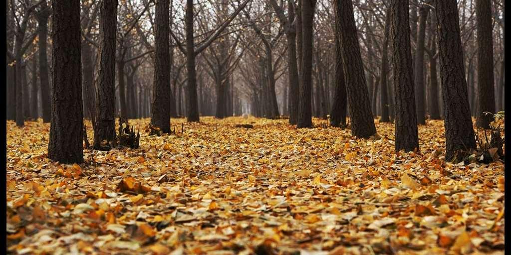 Novembri sündmused Luunja vallas
